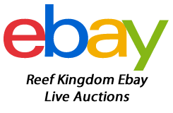 Live Coral For Sale Ebay